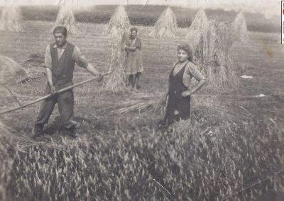 85.Żniwa u Malcharków w Czarnuchowicach w czasie II wojny św